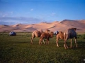 mongolisch-deutsch2