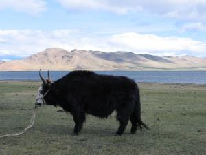mongolisch-deutsch-Gerelmaa13